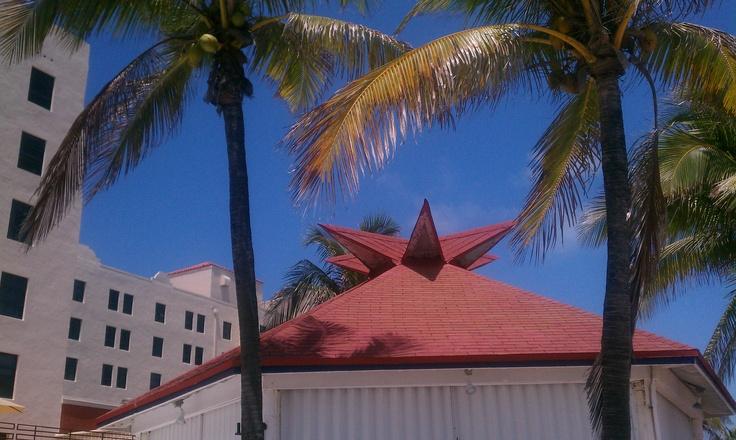 #Hollywood #Florida #Boardwalk #palmtrees #Beach