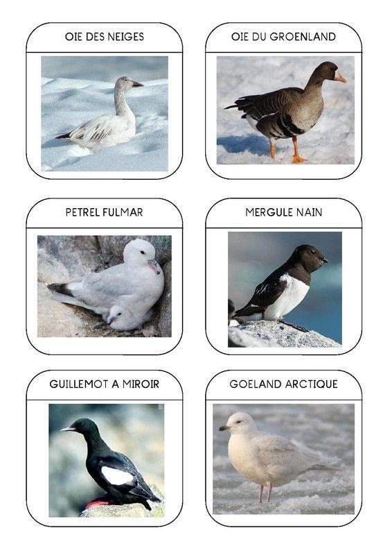 Imagier des animaux polaires page 11 activit s enfants imagier animaux polaires imagier - Animaux pole nord ...