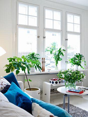 窓のパネルの前に一つずつ違う種類のグリーンを。鉢植えと切り花を交互に配置することで、リズムが生まれます。