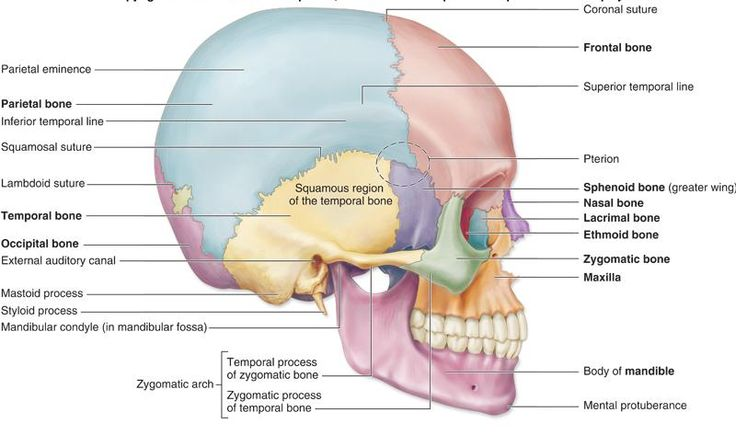 Anatomy Of Bones And Joints I General Considerations In Bones