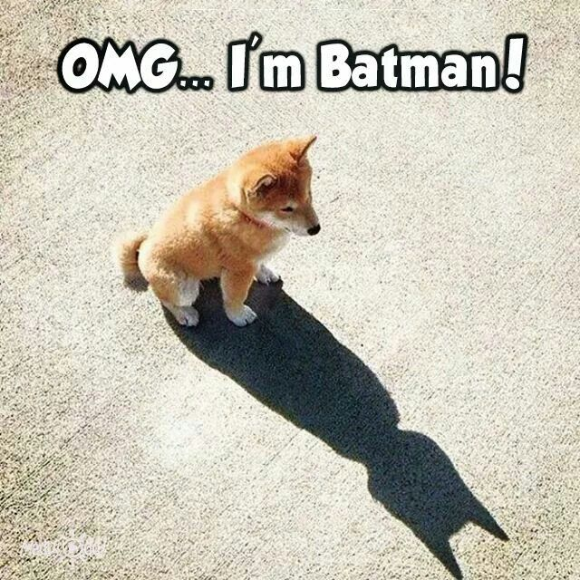 I can't be batman,but holly crape I'm actually BATMAN.(also dogs can't spell)