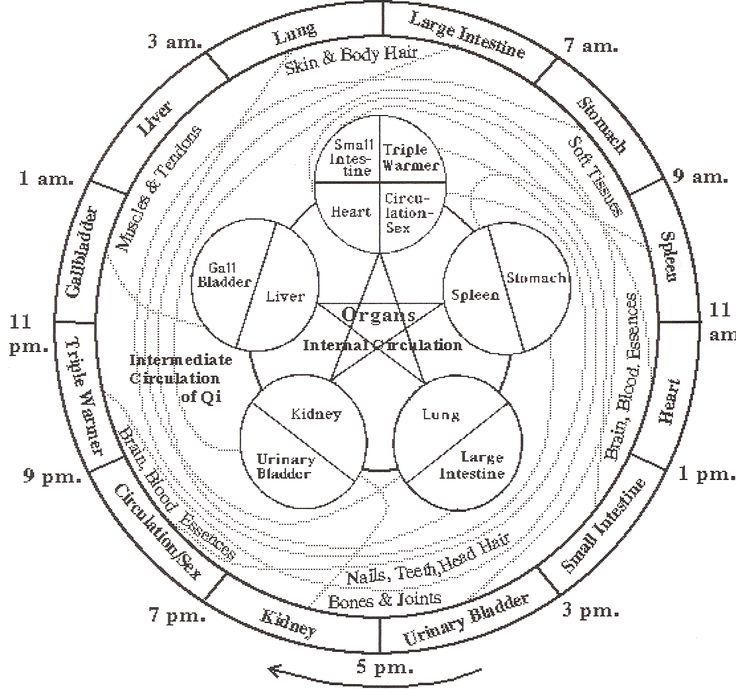mbypqw circadian rhythms massage