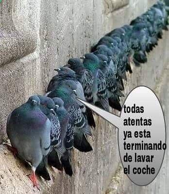 Preparados ... Listos ... Jajajaja #memes #chistes #chistesmalos #imagenesgraciosas #humor www.megamemeces.c... ➟➟➟ http://www.diverint.com/gifs-graciosos-gratis-despertar-ardiente