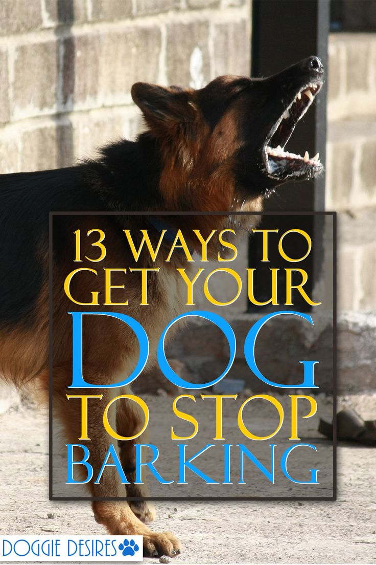 Can't seen to get your dog to stop barking? No worries. Here's 13 ways to get your dog to stop barking >> http://doggiedesires.com/get-your-dog-to-stop-barking/