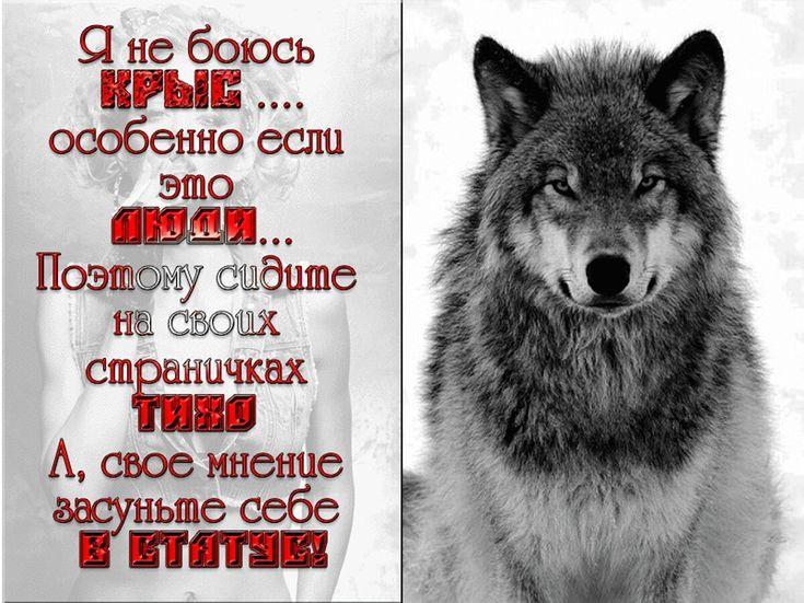 активный картинки волков с статусами смыслом мужские мнению автора, место