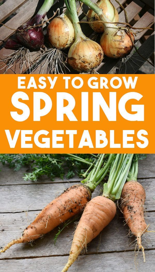When To Plant Early Spring Vegetables Spring Vegetable 400 x 300