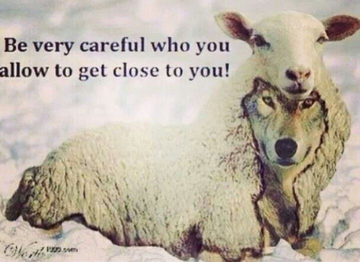 9 Best Quotes: Wolf In Sheep's Clothing..DON'T TRUST