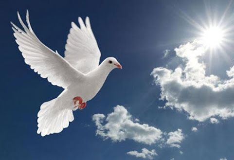 Pray for World Peace: Today, I'm sending love, light and prayers to the people of France and Turkey. I pray for comfort for the loved ones of those who perished in the recent tragic events this past week. I pray for restoration and peace. There's power in prayer. #peace #love #prayers #comfort #France #Turkey #worldpeace