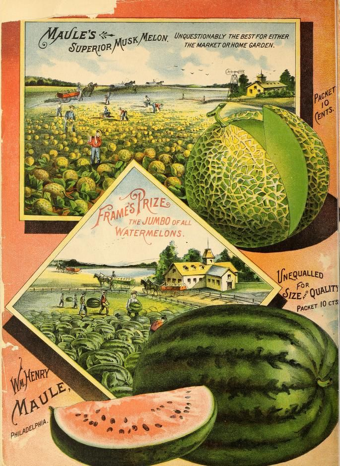 garden seed catalogs. Maule\u0027s Seed Catalogue For 1891, Back Page Garden Catalogs L