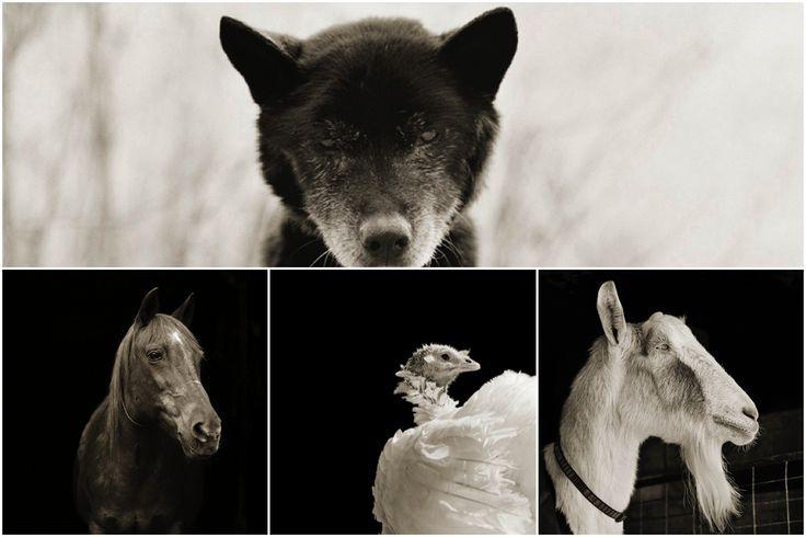 """Depois de passar um ano em Nova Jérsia a cuidar da sua mãe com Alzheimer, Isa Leshko, deparou-se com a infame problemática que nos afecta a todos, sem excepção, e que nos atinge com uma brutalidade agoniante: a morte. """"A experiência de cuidar da minha mãe teve um efeito muito profundo em mim que me obrigou a questionar a minha própria mortalidade"""", diz Isa. Dessa experiência nasceu a vontade de criar o projecto Elderly Animals, uma série de retratos de animais em fase terminal. Isa percorreu…"""