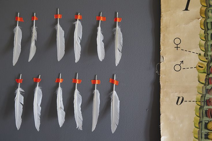 White feathers tapes to a grey wall with orange tape.