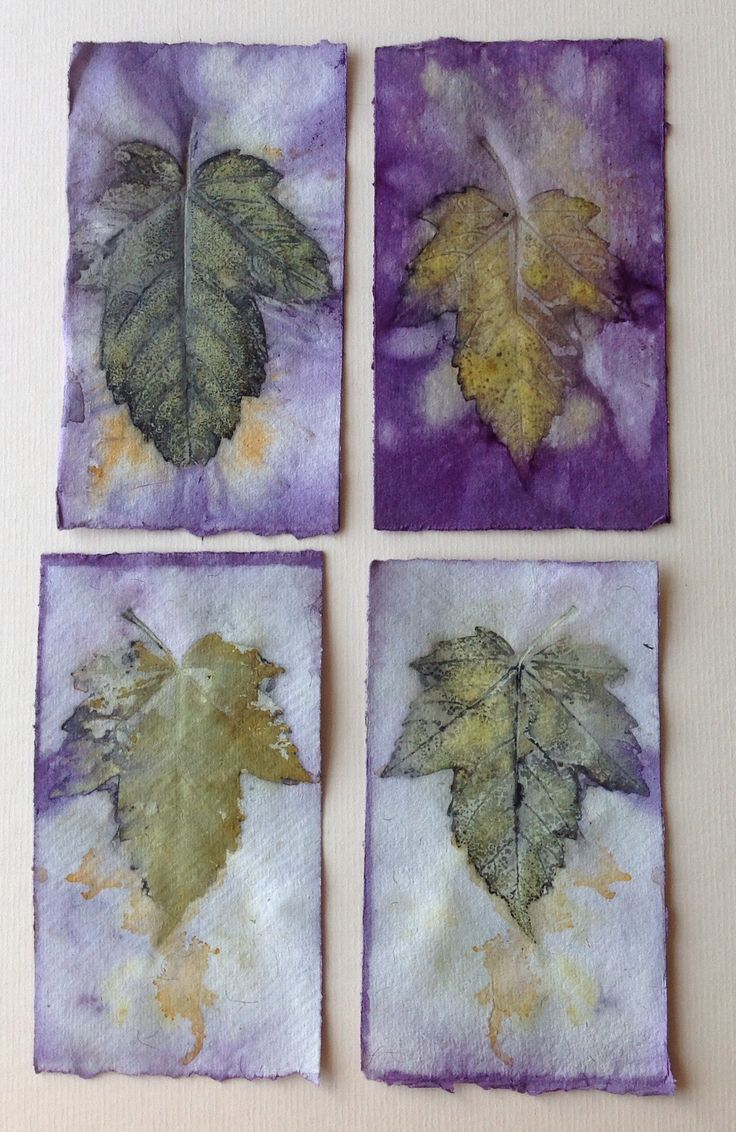Eco prints on paper by marilyn stephens artist for The art and craft of natural dyeing