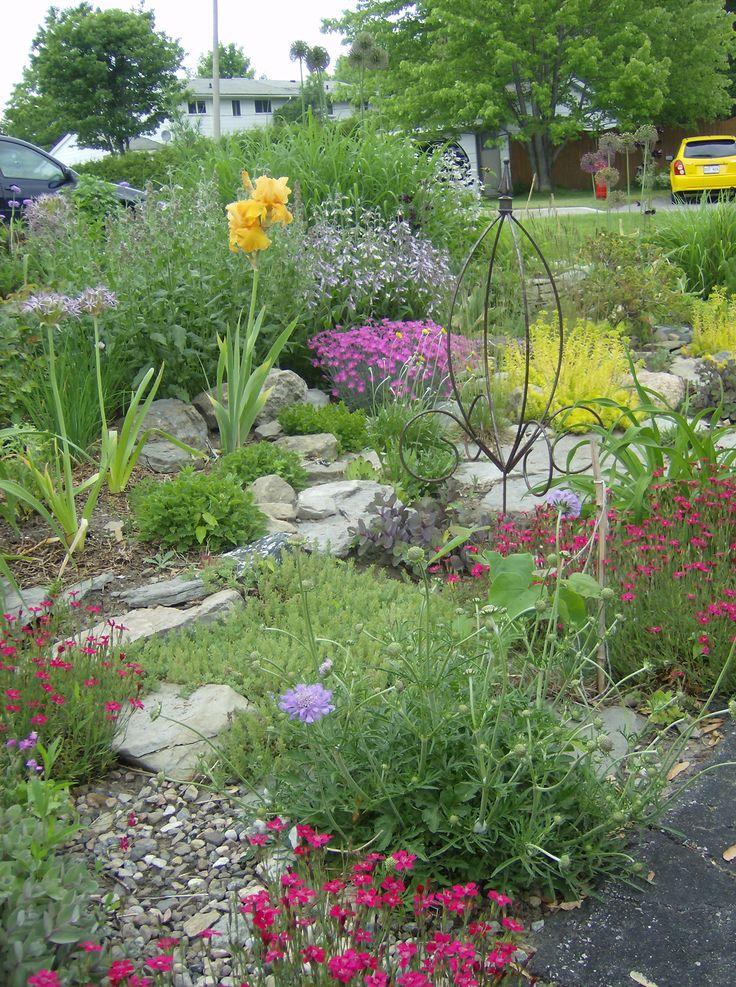 I love June!!!!  Dry flowerbed by the laneway: iris Orange Harvest, dianthus deltoides Briliant and dianthus Firewitch, penstemon hirsutus, sedum acre, sedum Angelina, scabiosa Butterfly Blue, etc.