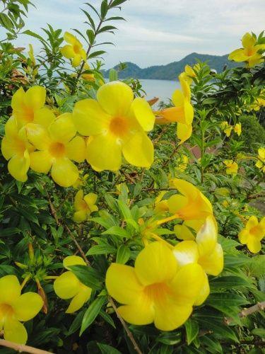 Trepadeiras vigorosas ou delicadas para serem cultivadas em casa, sem susto - Casa e Decoração - UOL Mulher