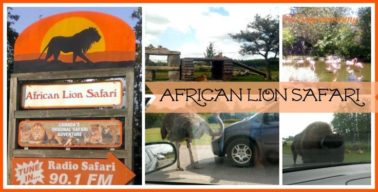 African Lion Safari Cambridge Ontario