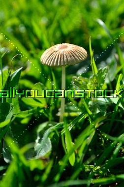 Fairy parasol * All You Can Stock