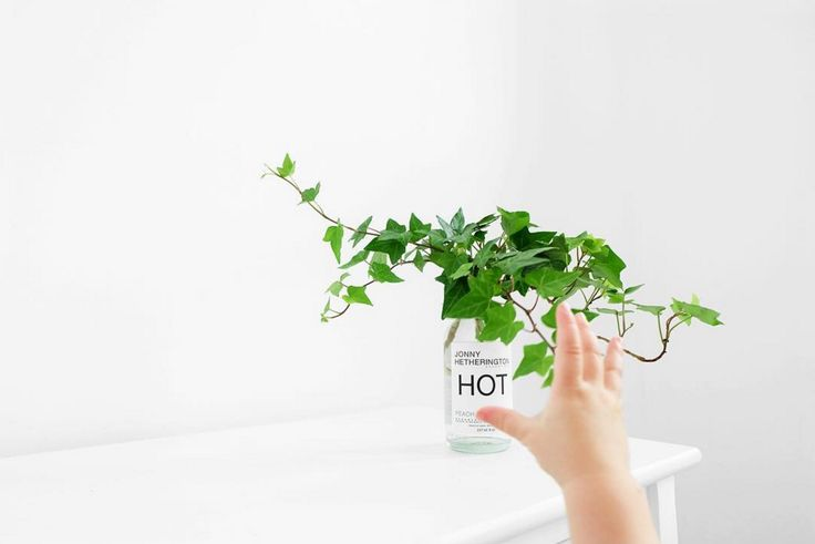 Little hands and baby steps… looks like our rooting plant projects might need find a higher shelf!  #EssentialReuse #JonnyHetheringtonEssentials #HotSauce #HabaneroSauce #Baby #Hand #Little #Plant #Green #Reuse #Recycle #GreenThumb #Vine #Leaves #Bottle #Glass #BostonRound #Typeface #Helvetica #Hot #Peach #Water #Gardening #IndoorPlant #White #Decor