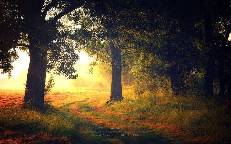 Delightful dream by markborbely.deviantart.com on @deviantART