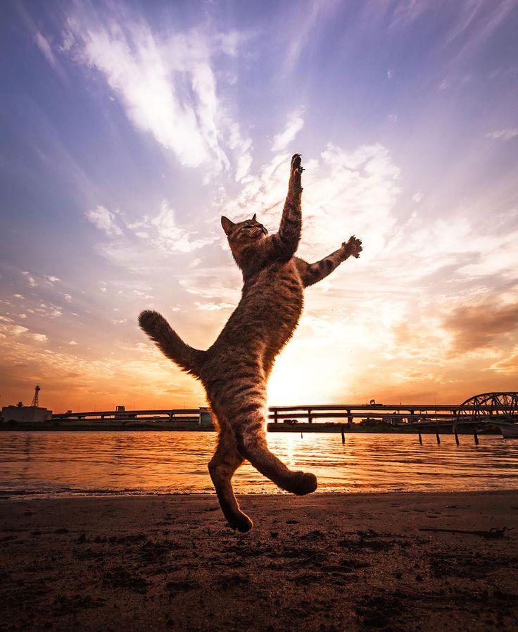 52 magnifiques photos de chats qui sautent  2Tout2Rien