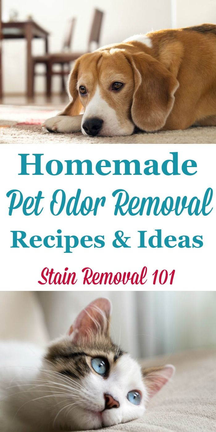 Lots of homemade pet odor removal recipes and ideas to enjoy your pets and your home at the same time {on Stain Removal 101}