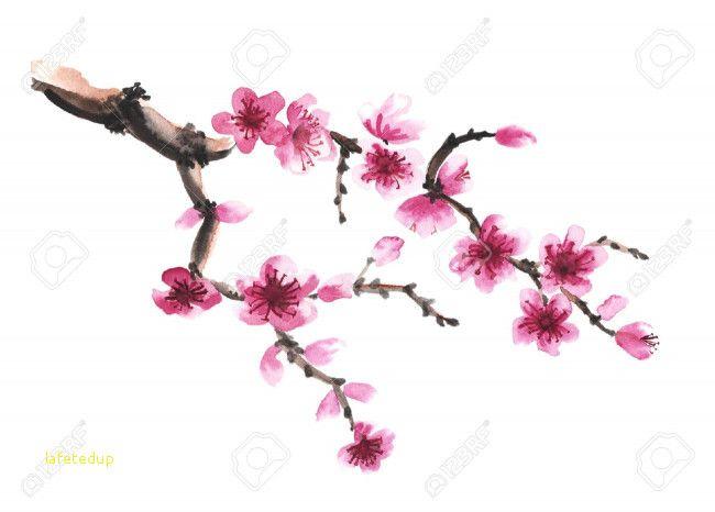 Fleur De Cerisier Dessin Excellent 76 Elegant Graphie De Cerisier Du Japon Dessin Noir Et Blanc En 2020 Fleur De Cerisier Dessin Fleur De Cerisier Japonais Fleur De Cerisier