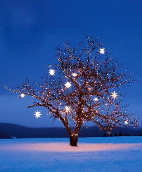 peaceful: Xmas Trees, Stars Lights, Starry Night, Christmas Lights, Winter Wonderland, Holidays, Twinkle Twinkle, Christmas Trees