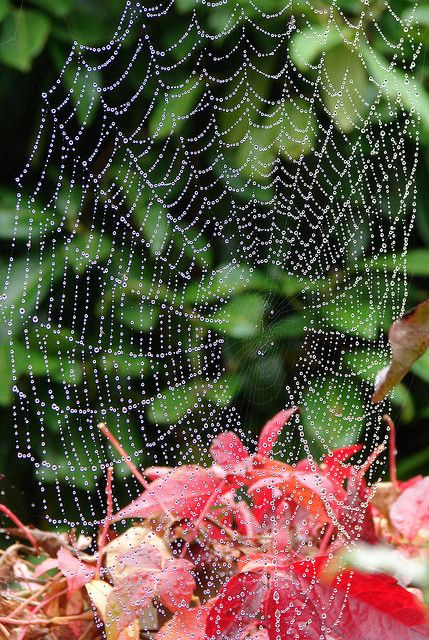 Morning Dew, on a spider web - Suffolk, England