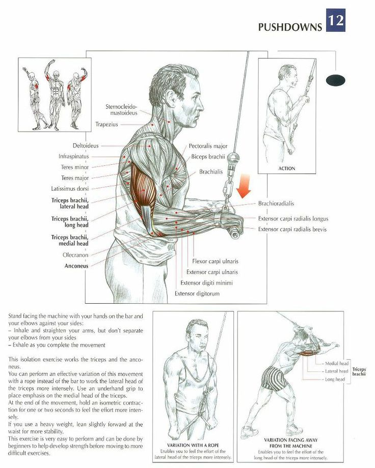 how to get big arms with weightless excercises