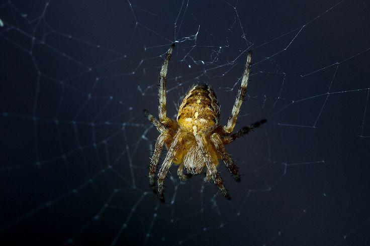 spider by Sergey Irkhin on 500px