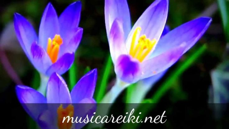 Música instrumental para relajarse