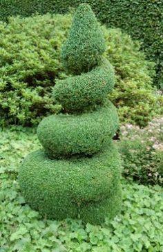 Types Of Boxwood Shrubs | Boxwood Shrubs, Planting, Care Of Boxwood Plants, Boxwood Varieties