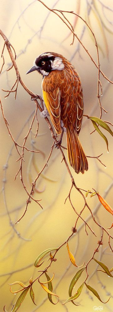 """New Holland Honeyeater"" - artwork by Christopher Pope - now available as fine art reproductions - http://www.artreproductions.com.au/gallery.php?artid=2364"
