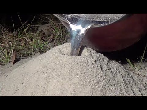 What is an aluminum Anthill Art sculpture? An intricate (and exact) replica of the interior of an ant hill. Creepy? Morose? Perhaps. Art? You Decide. Watch one being made here: | 6 Anthill Art Sculptures That Will Blow Your Mind