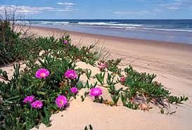Image result for Things to do in Walker bay