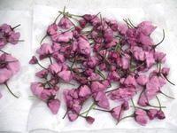 桜の花の塩漬けの作り方 - つくる楽しみ