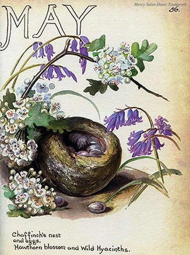 May - The Nature Notes of an Edwardian Lady.