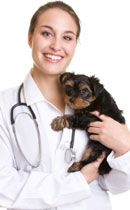 Dog Ear Infection Home Remedies - VetInfo