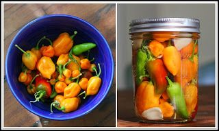 Pickled Peppers:Preserve the last of your garden crop with a simple brine and a jar.