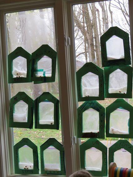Create a mini-greenhouse by Teach Preschool