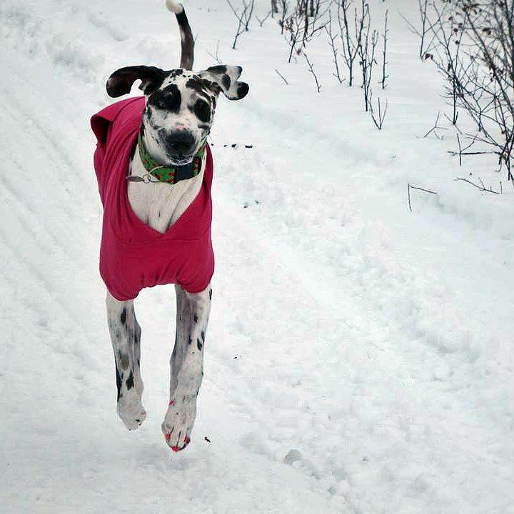 Valerie's dog Domino bouncing around in her winter wonderland