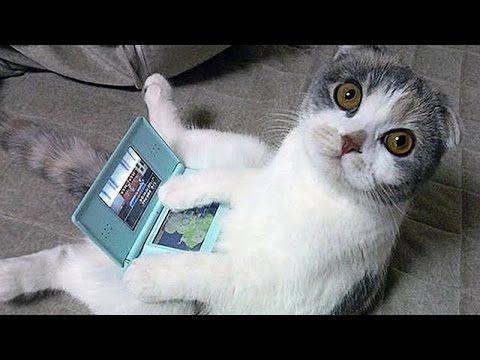 ♥ El Gato Mas Tierno Del Mundo ♥ Los Mejores videos de gatos ★ Humor Gatos Chistosos - YouTube