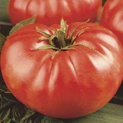 Mortgage Lifter Tomato Seeds - Tomato Seed - Vegetable Seeds - Gurney's Seed & Nursery