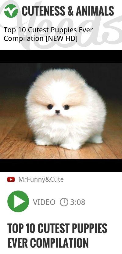 Top 10 Cutest Puppies Ever Compilation   #dogsoftwitter   http://veeds.com/i/O3G1HLfgzoxgxjog/cuteness/