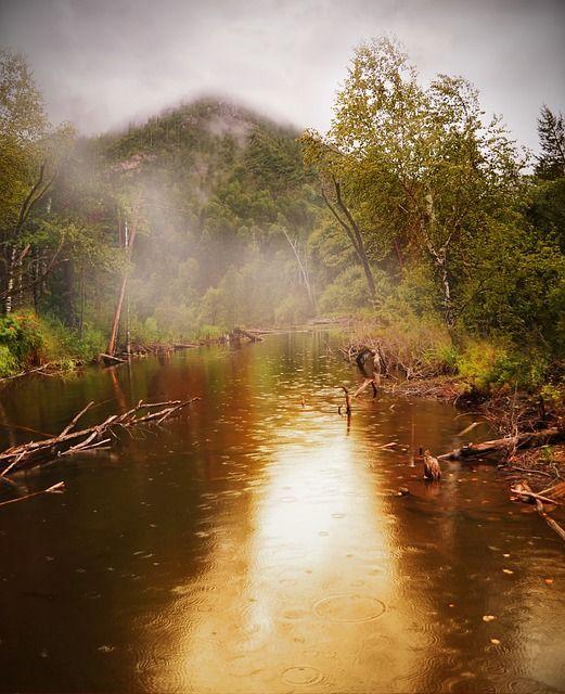 Rainforest, Sri Lanka - Photo by PublicDomainPictures