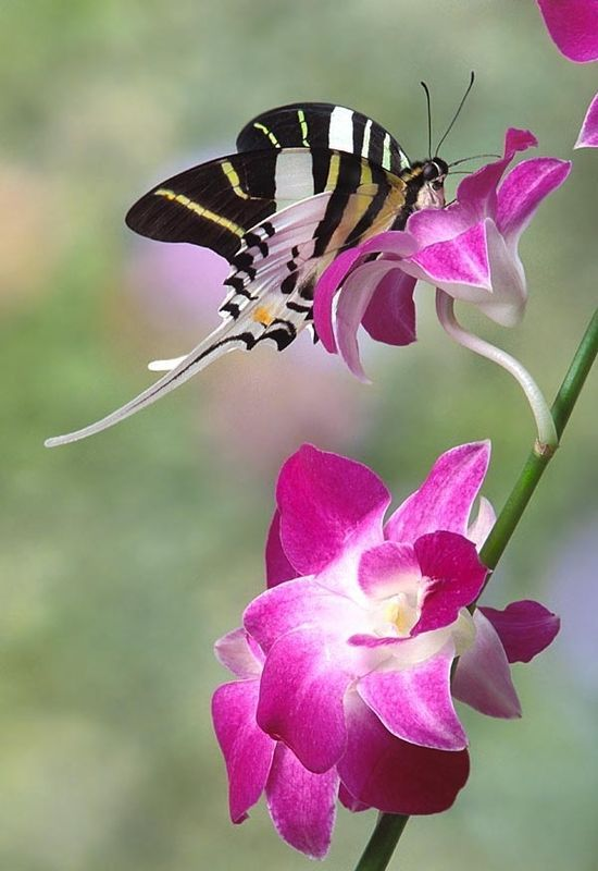 Incomparable Is The Beauty Of A Butterfly