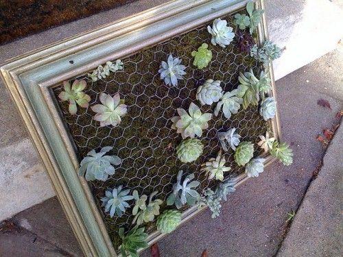 DIY Framed Hanging Succulent Garden | Shelterness