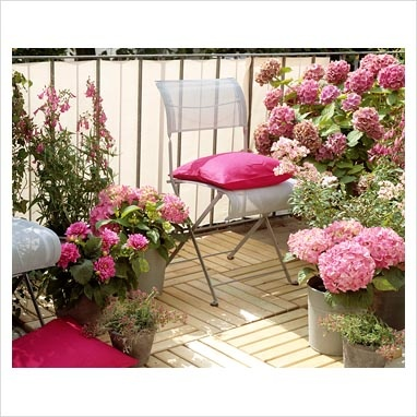 Image result for photos of flowers in balkon