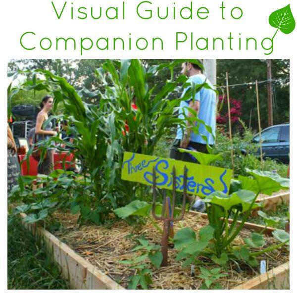 39 best images about gardening on Pinterest Gardens