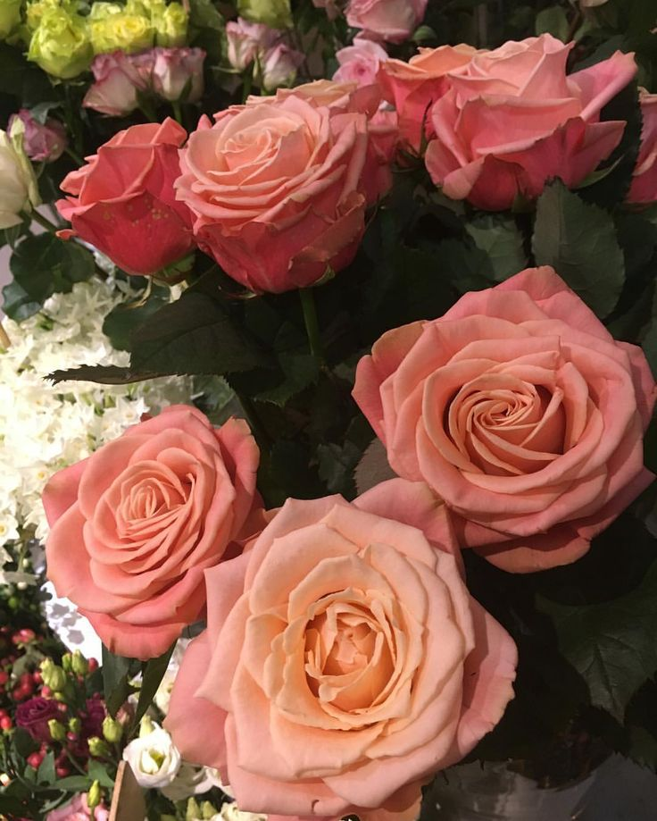 843 vind-ik-leuks, 15 reacties - F🌟hits / F🌟hits.TV (@fhits) op Instagram: 'Night Night ✨ com as rosas inglesas mais lindas 🌹 e meu amor profundo  para todo F🌟hits team que me…'