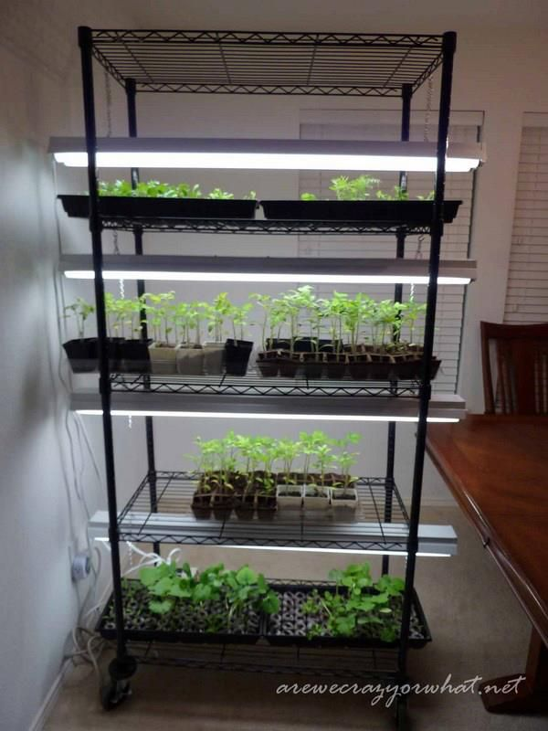 Building A Seed Growing Rack On The Cheap Diy Project